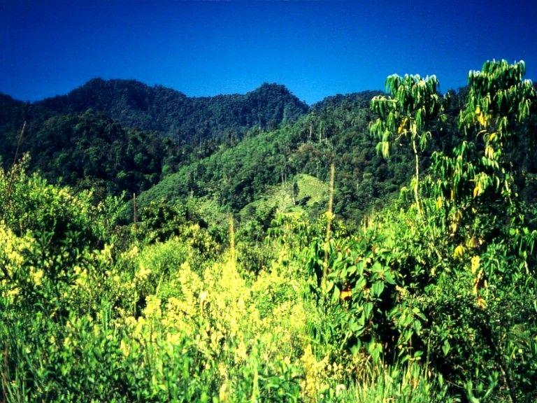 Ein schickes Regenwaldbild